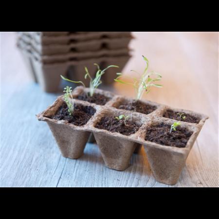 Növény ültetőtálca, 5 cm 10db*