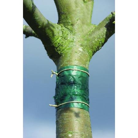 Ragadós rovarcsapda fatörzsre 150 cm