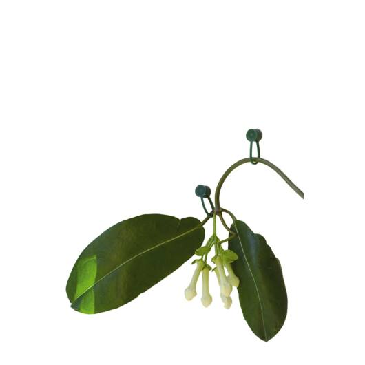 Futónövény rögzítő, zöld 15 db*